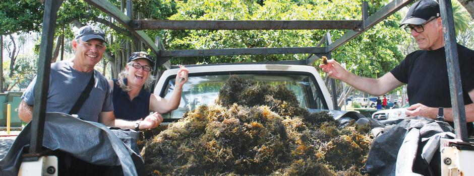 invasive-algae-cleanups_940