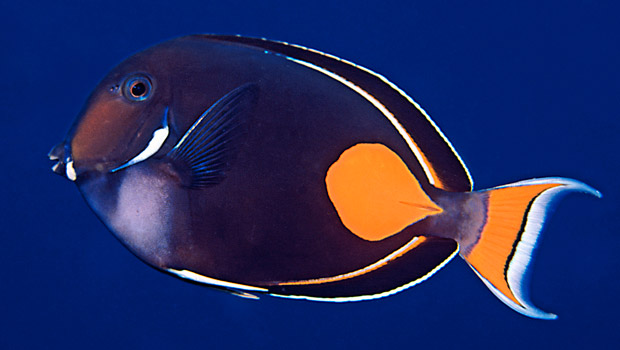 Achilles Tang Facts Achilles Tang