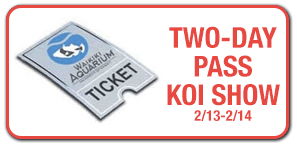 Koi Show Tickets