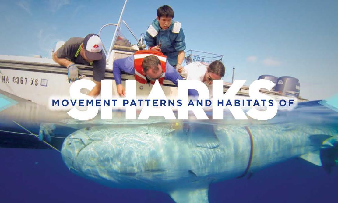 Movement, Patterns and Habitats of Sharks