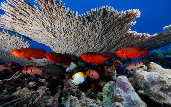 Papahānaumokuākea: New Frontiers for Exploration and Conservation