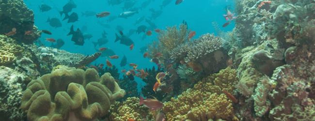 coralsustainability_enewsletterimage